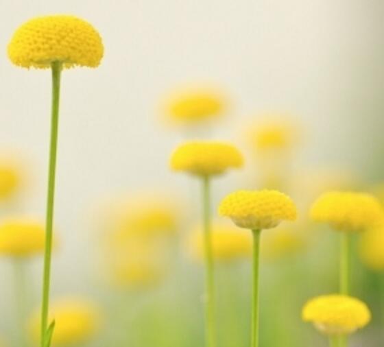 美容手法基本功_四种蜂蜜减肥方法,绿色健康效果好,肥胖人士的首选!